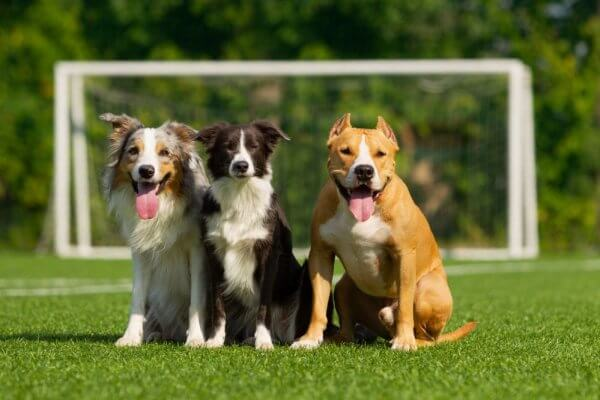 Evcil Hayvanlar İçin Suni Çim Halı